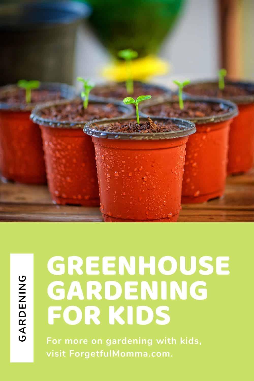 Mini Greenhouse Gardening with Kids