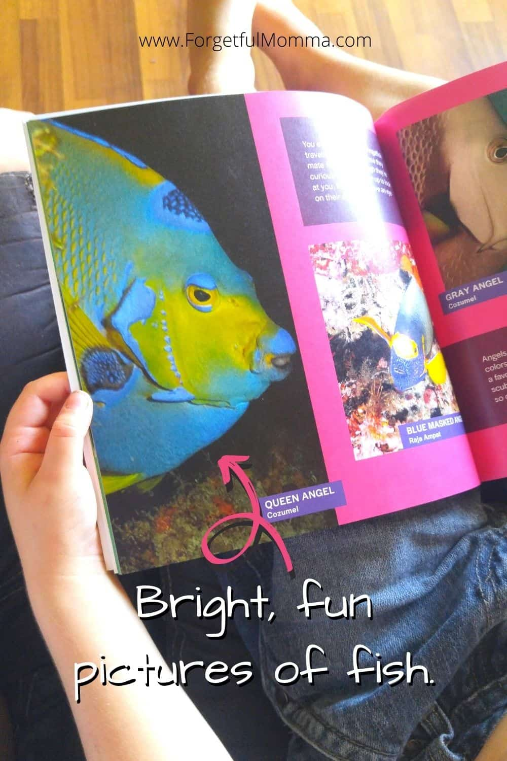 All fish Face Picture Book - page from book